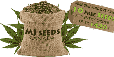 bag full of cannabis seeds