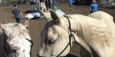 Equine Assisted Wellness Personal Development Learning equine therapy EAL EAW EAPD corporate