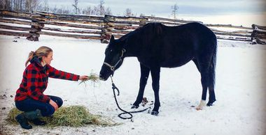 Equine Assisted Wellness Personal Development Learning equine assisted therapy EAL EAW EAPD EAT