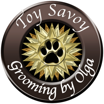 Toy Savoy Grooming by Olga