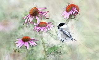 digital art, chickadee, coneflower, photoshop, layers