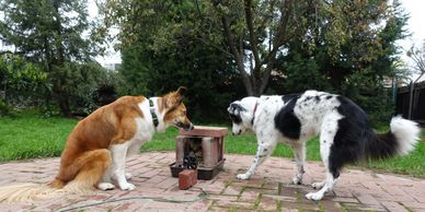 Keeping an eye on a cookstove experiment.