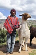 S. American Indian using a rope to guide the llama.  They don't use halters in the Andes Mts.