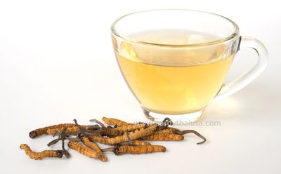 Cordyceps tea... the beginning of CORDYTHAI