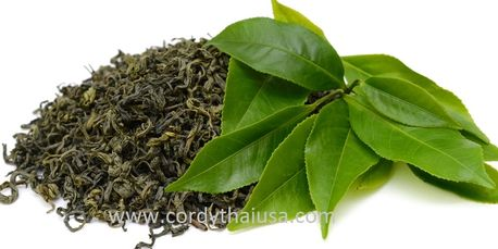 Green tea extract Theanine in PABLO natural sleep aid by CORDYTHAI ม.เกษตร