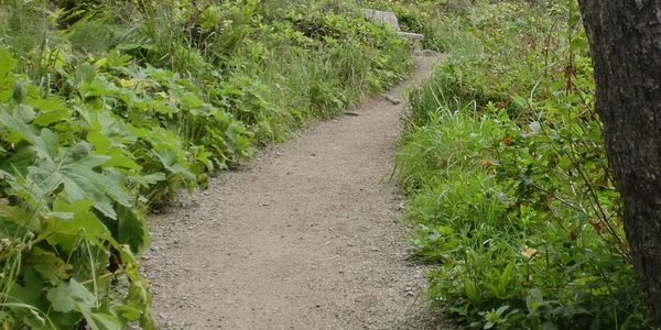 PHOTO OF UPHILL DIRT PATH WINDING THROUGH GREENERY TO A PARK BENCH