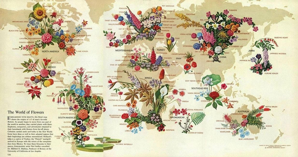 World Map of Flowers 1968 National Geographic