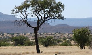 A tree standing tall in the grasslands of Africa