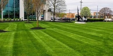 Mowing, Weed Control, and Fertilization, T&D keeps your lawn looking healthy and beautiful