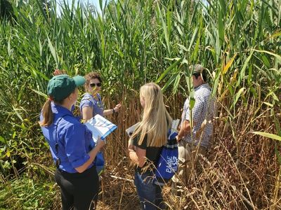 Photo provided by Shaun Grace of PAMF giving a field demonstration on monitoring Phragmites.