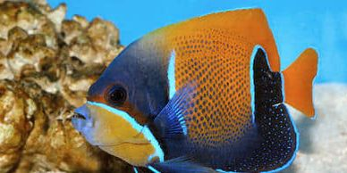 As the unofficial S. Burlington Aquarium, we carry a large variety of tropical fish, saltwater fish,