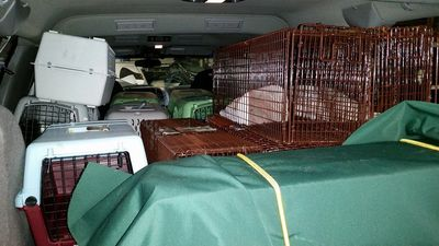"20 carriers & 10 traps in the Suburban—aka ""The Cat Carrier""—warm & dry! THIS is why we need it!"