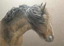 a Clydesdale horse with windswept mane - colour pencil drawing