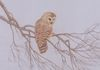 "'Barred owl at Dusk' - 18""x24"" - Donated to Nova Scotia Nature Trust."