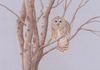 "'Barred Owl at Dusk' - 18""x24"" matted - For Sale."