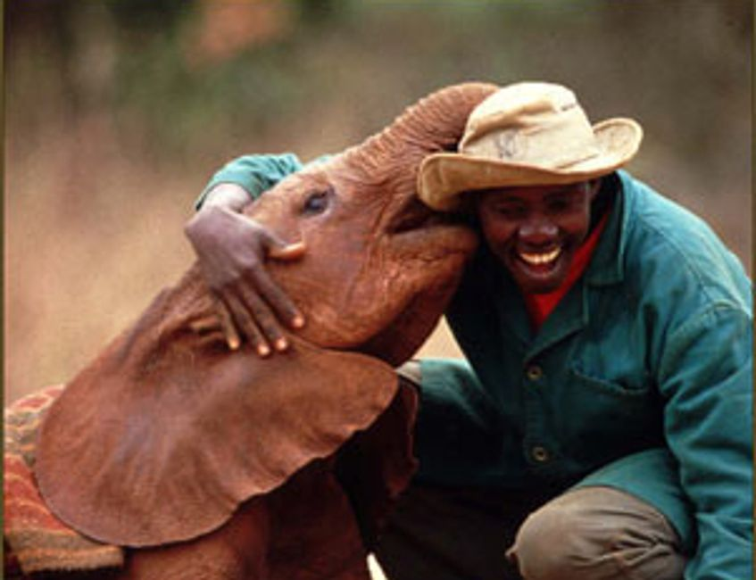 Sheldrick Foundation Africa, Help baby orphaned elephants