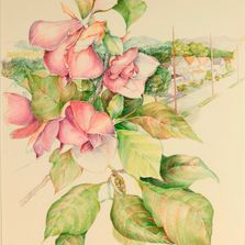 "Colored pencil drawing - Magnolia  outside my studio window. Acid -free rag paper, 18"" x 24"" framed"