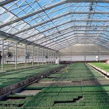 greenhouse, greenhouse plastic, greenhouse frame, greenhouse hoops, hoop, perlin, wiggle wire,