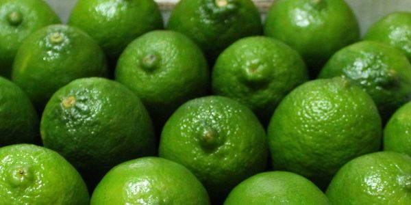 Fresh Limes all year-round!
