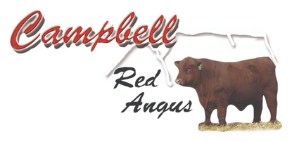 Campbell Red Angus