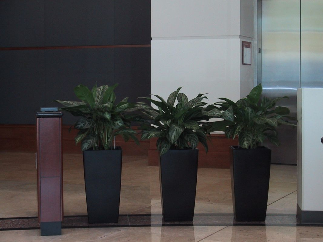 Interior Plant Design Interior Office Plants Interior Landscapes