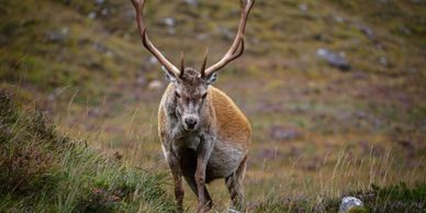 stag highlands photography scotland