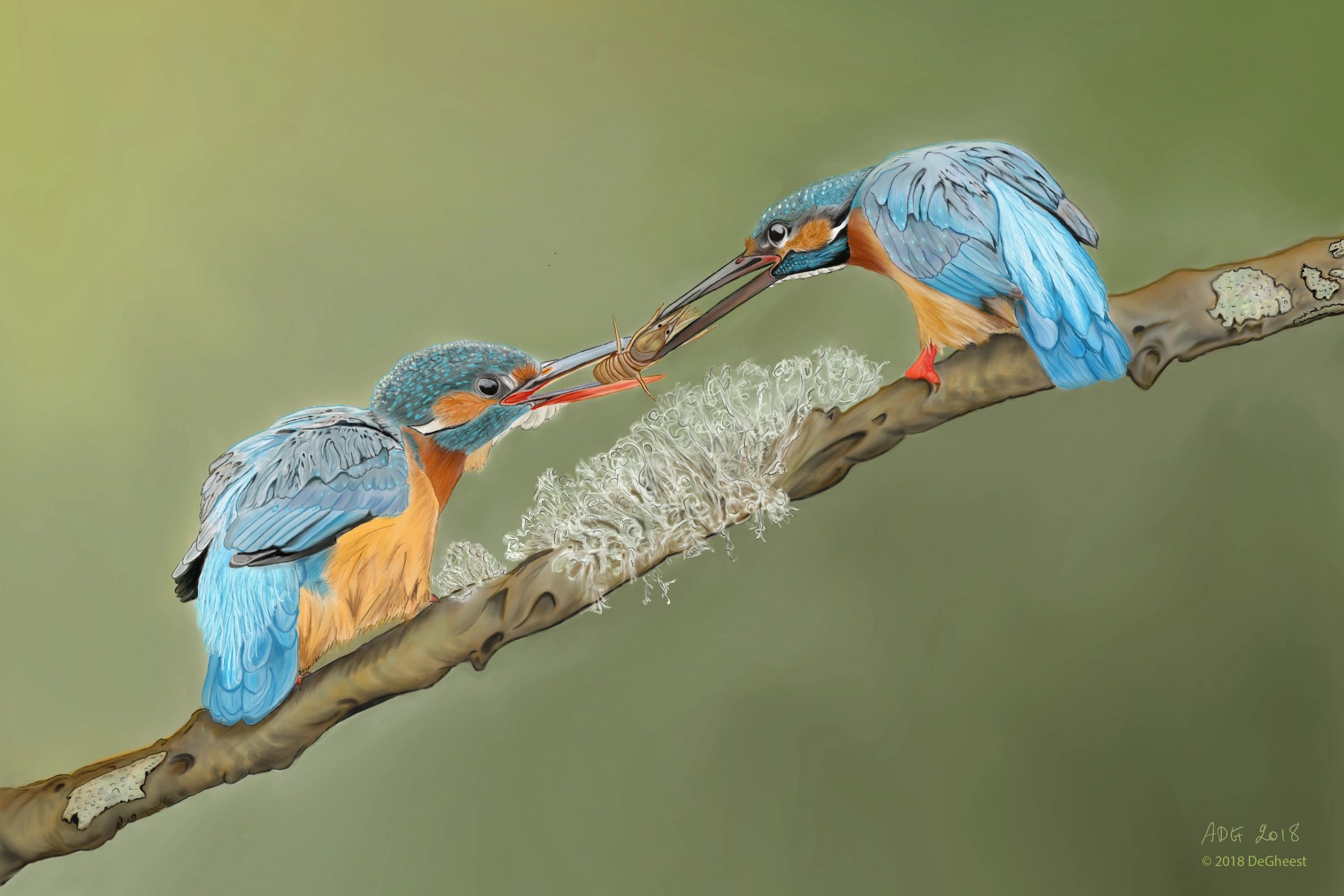 ADeGheest Kingfisher