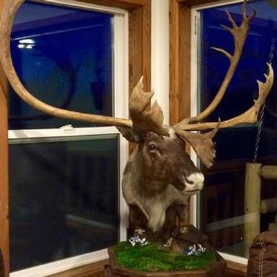Caribou table top pedestal by Naturally Wild Taxidermy