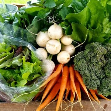 Carrots Organic with Csa share lettuce, greens, broccoli, chemical free local food, romaine chef