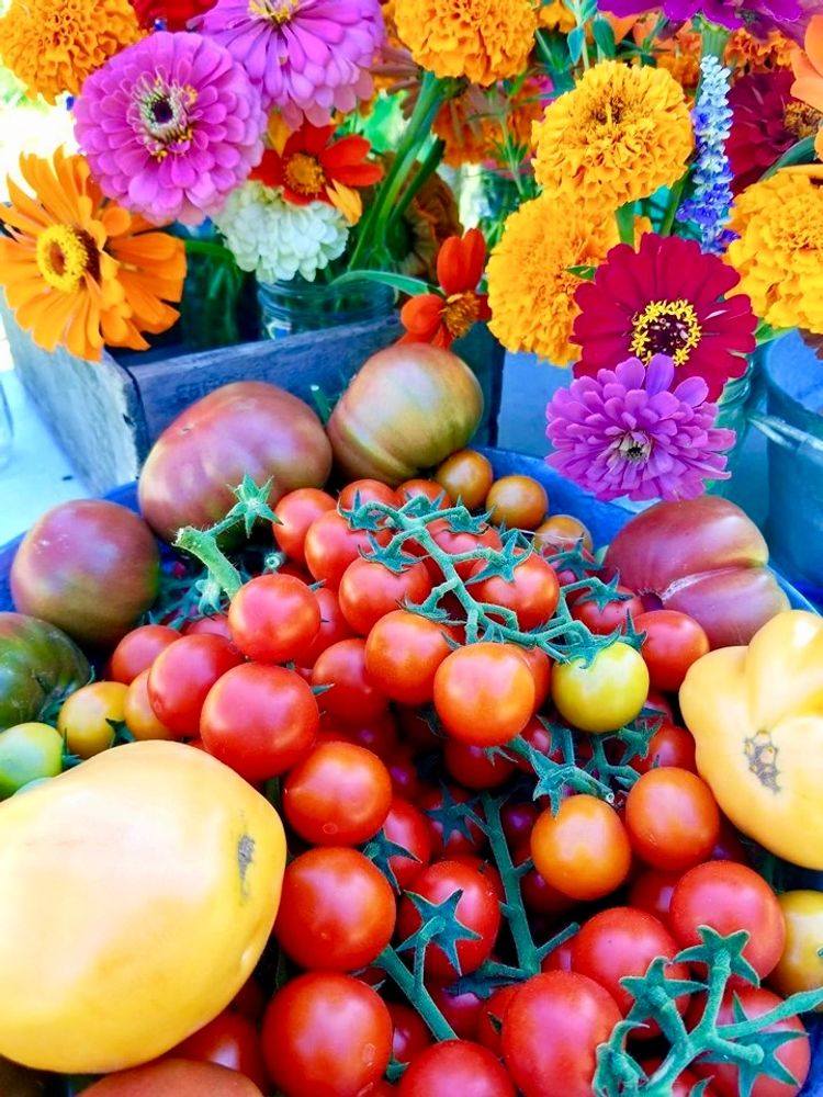 fresh indiana heirloom market tomatoes and summer garden flowers from the farm