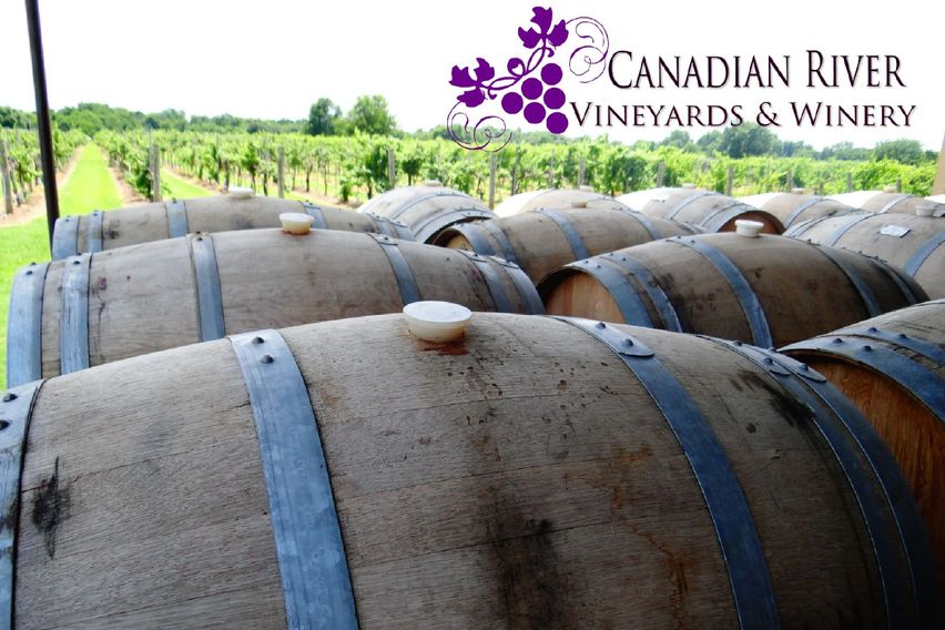 our barrels overlooking the vineyard