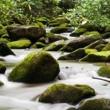 Cocke County, TN mossy river rocks in the Great Smoky Mountains.
