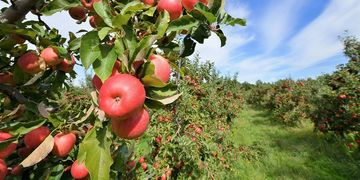 Cocke County TN Attractions in Agritourism - Kyle Carver's Orchard & Restaurant