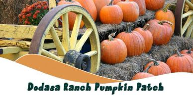 Dodasa Ranch Pumpkin Patch 2020 in Valley Springs, CA.