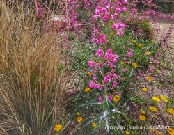 Grasses combine beautifully with perennials. Photo by Perennial Garden Consultants.