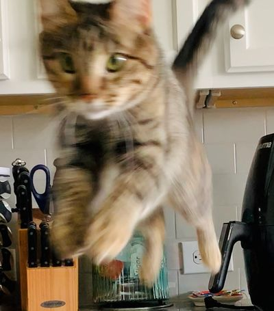 Cat Ella leaping into her day!