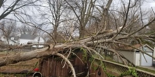 Emergency Tree Removal in Wallaceburg