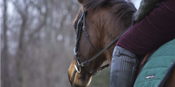 Many horses are ridden year round, regardless of the weather.