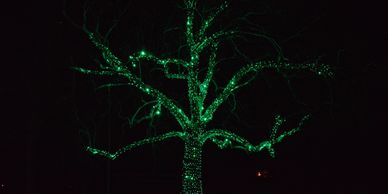 Christmas Lighting Installation Services