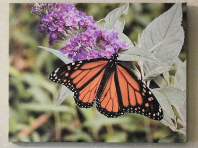"beautiful ""11x14"" Canvas print from artist Diane Pratt Priced at $40.00 nice accent to your home"