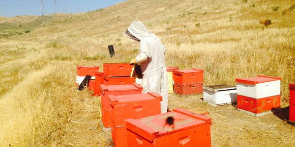 Commercial Bee Pollination and Bee Broker Services