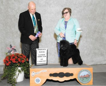 Winners Bitch Flatiron Kennel Club June 2, 2018 Dr Albert P Bianch