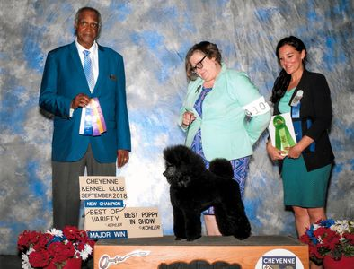 BOV  at Cheyenne Kennel Club to finisher her championship - Went on to be Best Puppy in Show