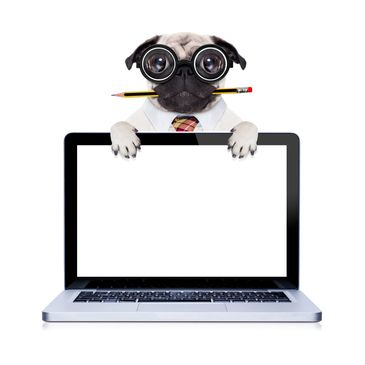 Dog with eyeglasses holding a laptop