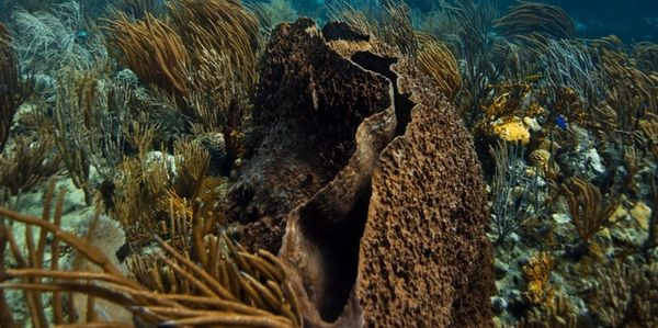 Dive sites: Big sponge at Alice in Wonderland