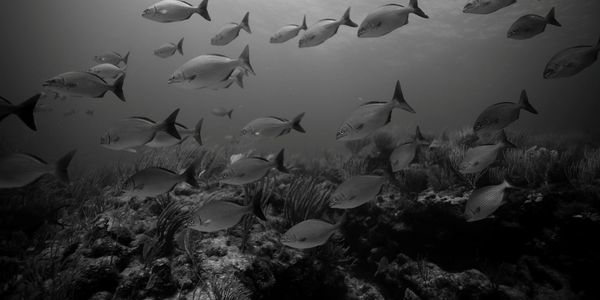 Dive sites: The invisibles