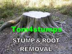 "tom 4 Tree ""stump removal & grinding"""