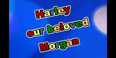 harley our beloved morgan video