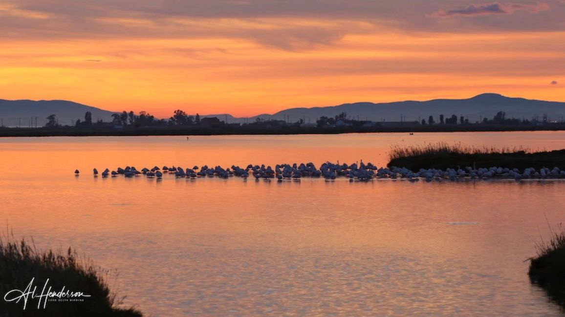 Greater Flamingos viewed as the sun sets on bird watching tours with Ebro Delta Birding