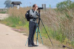 Bird watching holidays in Spain, birding tours of the Ebro Delta